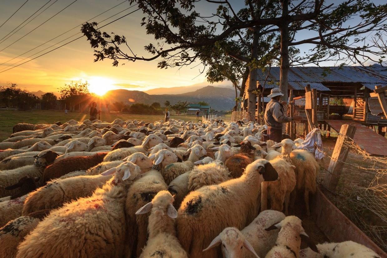 sheep, shepherd, farmer-3023520.jpg